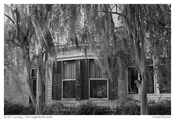 Black and White Picture/Photo: Spanish moss covered trees ...