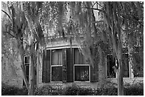 Spanish moss covered trees and windows. Selma, Alabama, USA ( black and white)