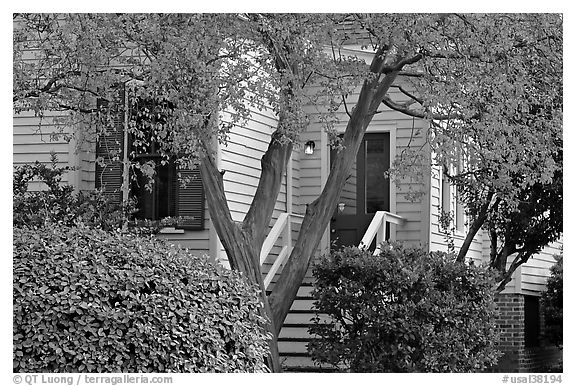 Tree in fall color and house. Montgomery, Alabama, USA (black and white)