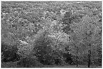 Trees in fall colors and city. Hot Springs, Arkansas, USA (black and white)