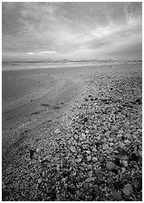 Beach covered with sea shells, sunrise, Sanibel Island. Florida, USA ( black and white)