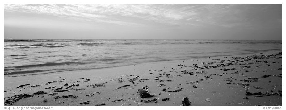 Beach seascape with washed seaweed, Sanibel Island. Florida, USA (black and white)