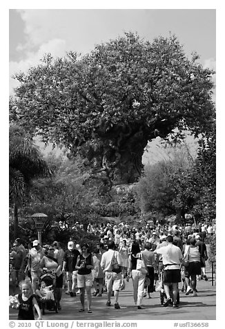 The Tree of Life, centerpiece of Animal Kingdom Theme Park. Orlando, Florida, USA (black and white)