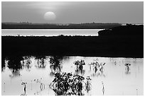 Sunset on mangroves. The Keys, Florida, USA (black and white)