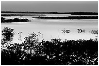 Mangroves after sunset. The Keys, Florida, USA (black and white)
