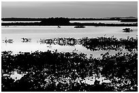 Mangroves at dusk, Cudjoe Key. The Keys, Florida, USA (black and white)