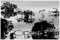 Detail of mangrove shapes, Cudjoe Key. The Keys, Florida, USA ( black and white)