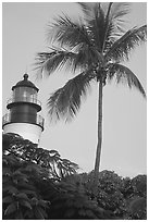 Lighthouse and palm tree. Key West, Florida, USA (black and white)