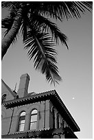 Red house and palm tree. Key West, Florida, USA ( black and white)