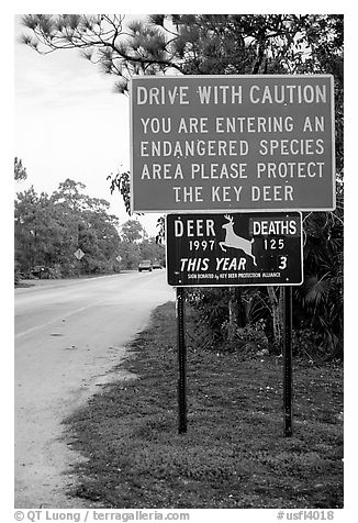 Sign warning about the endangered Key deer, Big Pine Key. The Keys, Florida, USA (black and white)