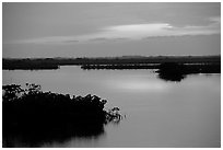 Mangroves shore on cloudy dawn. The Keys, Florida, USA (black and white)