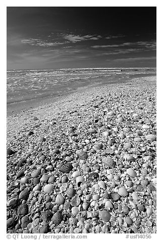 Beach covered with sea shells, mid-day, Sanibel Island. Florida, USA (black and white)