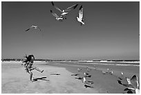 Beach with flying seagulls and girl, Jetty Park. Cape Canaveral, Florida, USA ( black and white)