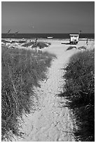 Sandy path leading to beach, Jetty Park. Cape Canaveral, Florida, USA ( black and white)