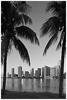Palm trees and Miami skyline at sunrise. Florida, USA ( black and white)