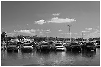 Cars in flooded lot, Matheson Hammock Park. Coral Gables, Florida, USA ( black and white)