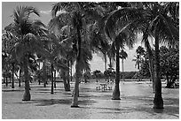 Flooded grove of palms and picnic table  Matheson Hammock Park, Coral Gables. Florida, USA (black and white)