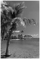 Palm trees and pond,  Matheson Hammock Park, Coral Gables. Florida, USA (black and white)