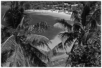 Beach seen from above through palm trees, Bahia Honda Key. The Keys, Florida, USA ( black and white)