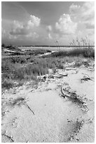 White sand, vegetation, Fort De Soto beach. Florida, USA (black and white)