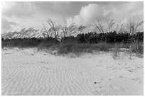 Rippled white sand and grasses, Fort De Soto beach. Florida, USA ( black and white)