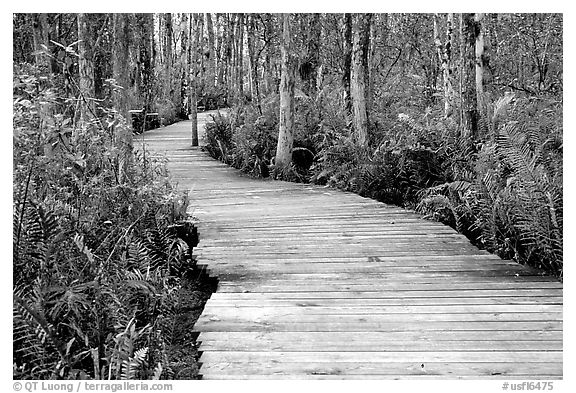 Boardwalk, Loxahatchee NWR. Florida, USA (black and white)