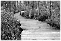 Boardwalk, Loxahatchee NWR. Florida, USA ( black and white)