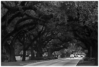 Road through tree tunnel. Coral Gables, Florida, USA ( black and white)