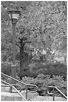 Lamp and autumn colors, Centenial Olympic Park. Atlanta, Georgia, USA (black and white)