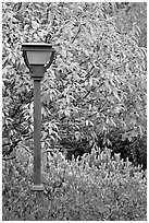 Blue lamp and trees in fall foliage, Centenial Olympic Park. Atlanta, Georgia, USA (black and white)