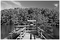 Boardwalk and cypress,  Lake Providence. Louisiana, USA ( black and white)
