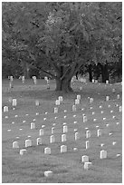 Cemetery, Vicksburg National Military Park. Vicksburg, Mississippi, USA (black and white)