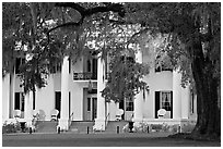 Antebellum house and live oak tree. Natchez, Mississippi, USA ( black and white)