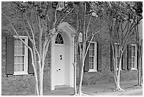 Rows of trees and Texada house. Natchez, Mississippi, USA ( black and white)