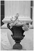 Vasque and column, Magnolia Hall. Natchez, Mississippi, USA ( black and white)