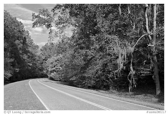 Road curve bordered by tree with Spanish Moss. Natchez Trace Parkway, Mississippi, USA (black and white)