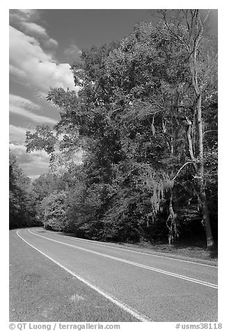 Road turn with trees and Spanish Moss. Natchez Trace Parkway, Mississippi, USA (black and white)