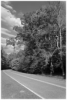 Road turn with trees and Spanish Moss. Natchez Trace Parkway, Mississippi, USA ( black and white)