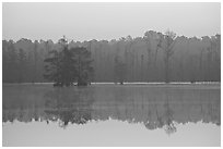 Lake with cypress and dawn. South Carolina, USA ( black and white)