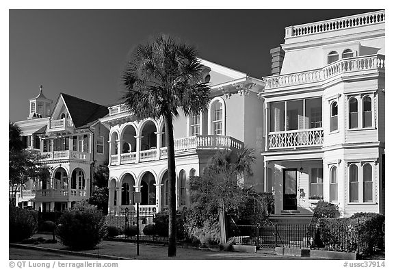 Black And White Picture/Photo: Row Of Antebellum Houses