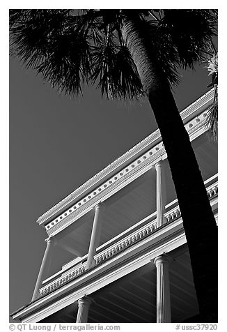 Palm tree and facade with columns, looking upwards. Charleston, South Carolina, USA (black and white)