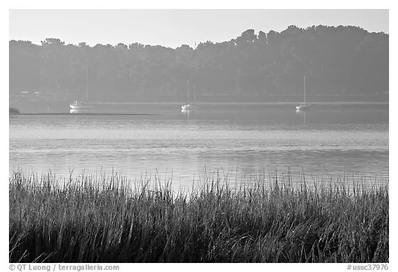 Beaufort Bay, with grasses and yachts. Beaufort, South Carolina, USA (black and white)