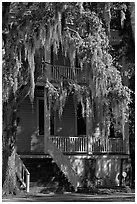 Spanish moss and balcony house. Beaufort, South Carolina, USA (black and white)