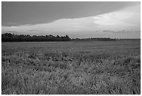 Grasses at sunset, Hilton Head. South Carolina, USA ( black and white)