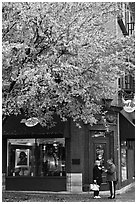 Tree in fall foliage and brick building. Nashville, Tennessee, USA (black and white)