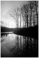 Sunrise over a pond. Tennessee, USA (black and white)