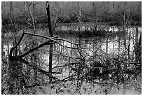 Swamp reflections. Tennessee, USA ( black and white)