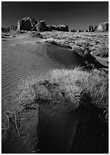 Grasses and sand dunes. Monument Valley Tribal Park, Navajo Nation, Arizona and Utah, USA ( black and white)