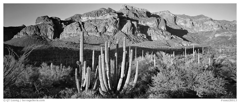 Scenery with organ pipe cactus and desert mountains. Organ Pipe Cactus  National Monument, Arizona, USA (black and white)