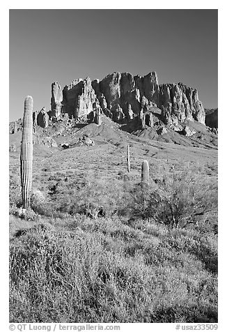 Tall cacti and Superstition Mountains, Lost Dutchman State Park, afternoon. Arizona, USA (black and white)